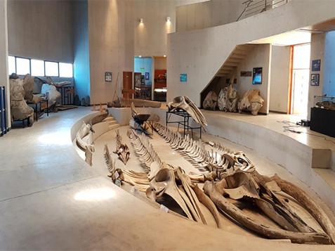 Restos Arqueológicos San Antonio